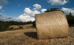 Hay (Caligari77) from www.pixabay.com